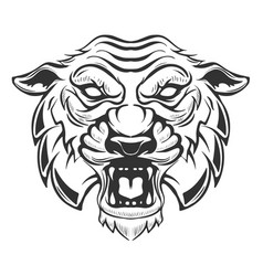 Tiger head isolated on white background images vector