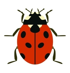 Cute cartoon ladybug insect vector image
