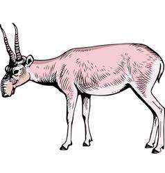 Saiga Antelope tatarica vector image vector image