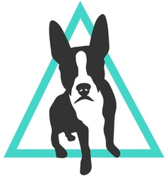 Boston terrier icon in triangle vector