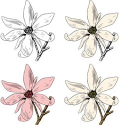 Flower Anise Magnolia vector image vector image
