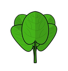 Spinach isolated bunch of green fresh green leaf vector