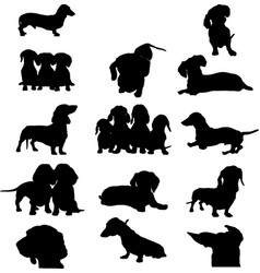 Dachshund dog image vector