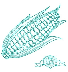 Outline hand drawn sketch of corncob flat style vector