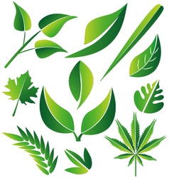 Leaf icon graphic set vector
