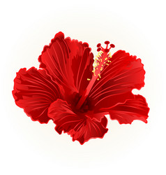 Red hibiscus simple tropical flower vintage vector