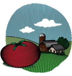 Tomato scene color vector