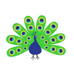 Peacock with open tail feather out beautiful vector