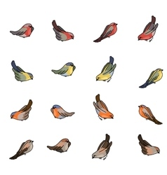Set with different small birds - bullfinch tit vector image