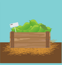 Mango in a wooden crate vector