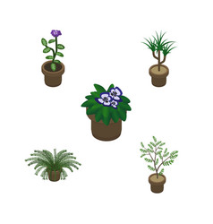 Isometric houseplant set of plant fern flowerpot vector