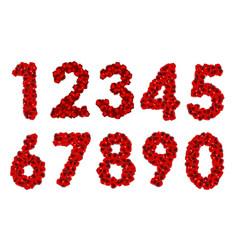 Rose petals realistic number vector