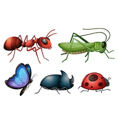 Various insects and bugs vector