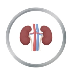 Kidney icon in cartoon style isolated on white vector