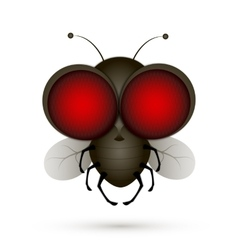House fly insect vector