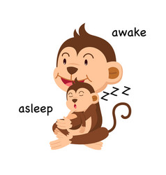 opposite words asleep and awake vector image vector image