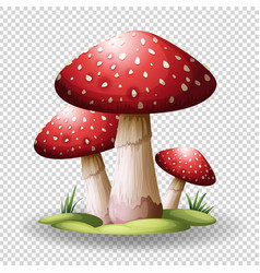 red mushrooms on transparent background vector image