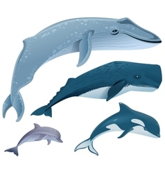 Set marine mammals blue whale sperm whale vector