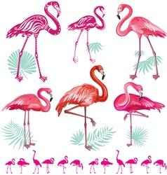 Set of pink flamingoes vector