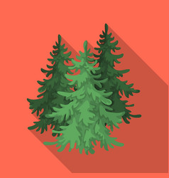 Canadian spruce canada single icon in flat style vector