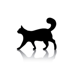 Cat icon symbol on white vector image