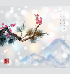 pine tree branch and sakura in blossom vector image vector image