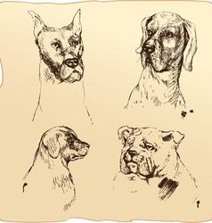Set of dogs heads - dalmatian bloodhound bulldog h vector