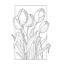 Tulip flowers coloring book vector
