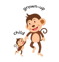 opposite words child and grown up vector image