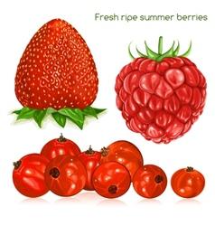 Fresh ripe summer berries vector image