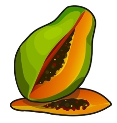 Exotic fruit papaya in cartoon style vector