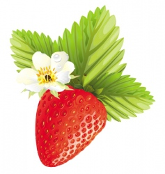 Strawberry design vector