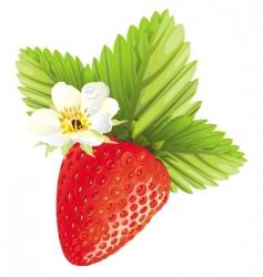 strawberry design vector image
