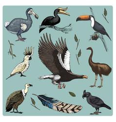 Hand drawn realistic bird sketch graphic vector
