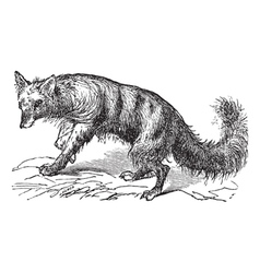 Vintage Aardwolf Sketch vector image vector image