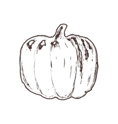Pumpkin sketch vegetable healthy food icon vector