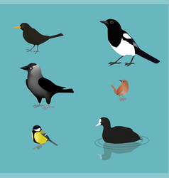 Bird collection vector