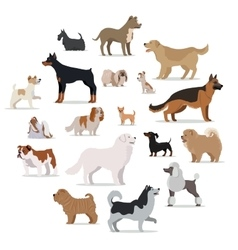 Dogs breed set in cartoon style isolated on white vector