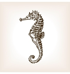 Sea horse hand drawn sketch vector