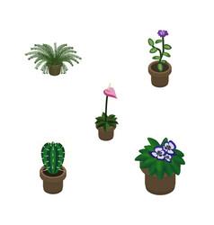 Isometric flower set of flowerpot grower flower vector