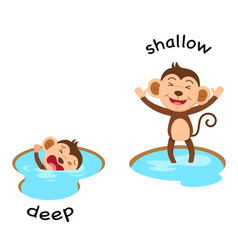 Opposite words deep and shallow vector