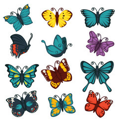 butterflies species types decoration design vector image vector image