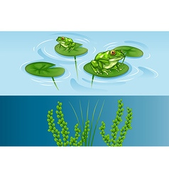 Frogs on water lily and underwater scene vector image