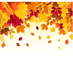 falling autumn leaves vector image