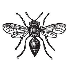 Card making wasp vintage vector