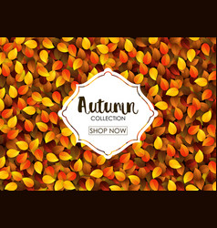 autumn collection sale banner vector image vector image
