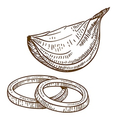 Engraving onion slices vector
