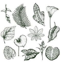 hand drawn tropical plants monochrome set vector image