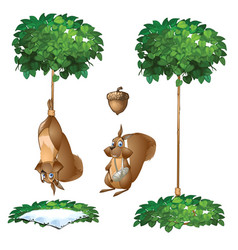 Trap for squirrel hang animal and with broken paw vector