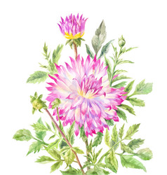 yellow-pink large dahlia rennored with vector image
